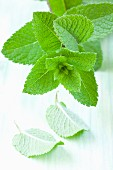 Fresh mint (close-up)