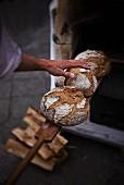 Bäcker holt frisch gebackene Brote aus dem Backofen