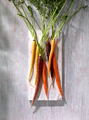 Various types of carrots (seen from above)