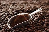 Schaufel mit Kaffeepulver auf Kaffeebohnen