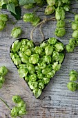 Hops umbels inside a heart-shaped cutter