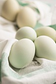 Hen's eggs with green shells
