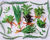 An arrangement of herbs with fresh bunches of herbs