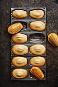 Madeleines in a baking tin (seen from above)