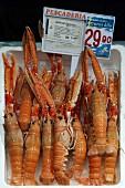 Kaisergranate auf dem Fischmarkt in Bilbao, Baskenland, Spanien