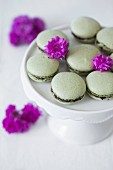 Green macaroons with matcha tea and chocolate ganache on cake stand