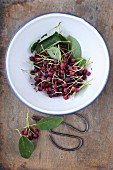 Juneberry fruits in an enamel bowl with a pair of vintage scissors