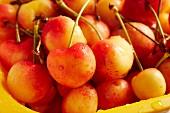 Freshly washed Rainier cherries