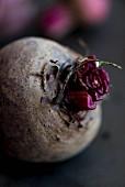 Beetroot (close-up)