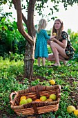 A little girl giving her mother a freshly picked orange in a garden