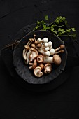 Shimeji and shiitake mushrooms on a black plate