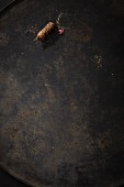 Jerusalem artichoke on a metal surface