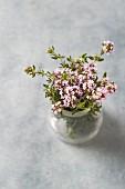 Frischer Thymian (Thymus vulgaris), blühend, im Glas