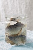 An open jar of pickled herring fillets