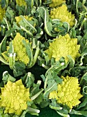Romanesco broccoli at a market