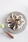 Fresh oysters on ice with lime