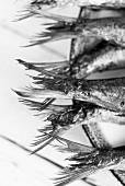 Oven-roasted sardines