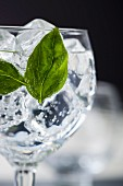 A gin and tonic garnished with basil leaves