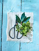 Thyme, bay leaves and a pair of herb scissors on a light blue wooden surface