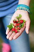 A woman holding wild strawberries