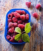 Fresh raspberries and raspberry leaves in a blue plastic punnet