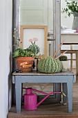 Gestrickter Deko Kaktus auf Blumentischchen