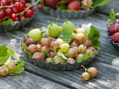 Freshly picked gooseberries in flan tin