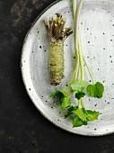A fresh wasabi plant