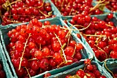 Baskets of fresh redcurrants at the Union Square Greenmarket, Manhattan, New York City, USA