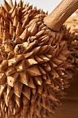 A durian (close-up)