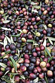 Fresh olives (full-frame)