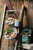 Various types of freshly harvested mushrooms in baskets and containers
