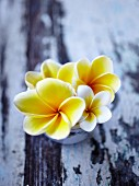 Frangipani flowers in a cup on a wooden surface