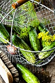 Pickling cucumbers being washed