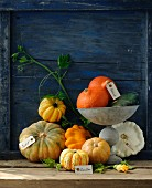 Various pumpkins, some with labels, against a wooden wall