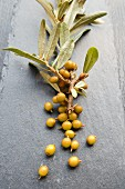 Sea buckthorn berries on a sprig