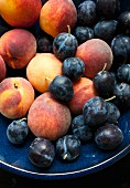 Peaches and plums in a navy blue bowl