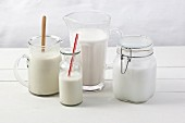 Various types of vegan milk