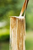 Ramen noodles on a scoop