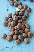 Hazelnuts on a pastel blue surface