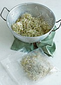 Homegrown alfalfa sprouts