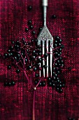 An old fork with ripe elderberries on an old tablecloth