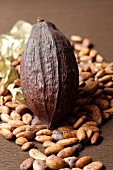 Cocoa beans and a coca pod