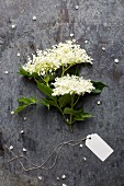 A sprig of freshly picked elderflowers (seen from above)