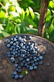 Ripe blueberries on a wooden chair in dappled sunlight