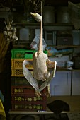 A dead goose hanging in butcher's shop