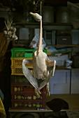 Tote Gans hängt im Fleischerladen