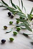 Fresh olives with an olive sprig