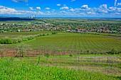 Berühmtes ungarisches Welschriesling Weinbaugebiet in Abasár