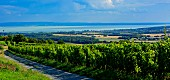 Winegrowing region Balatonfüred – Csopak with a view of the lake, Hungary